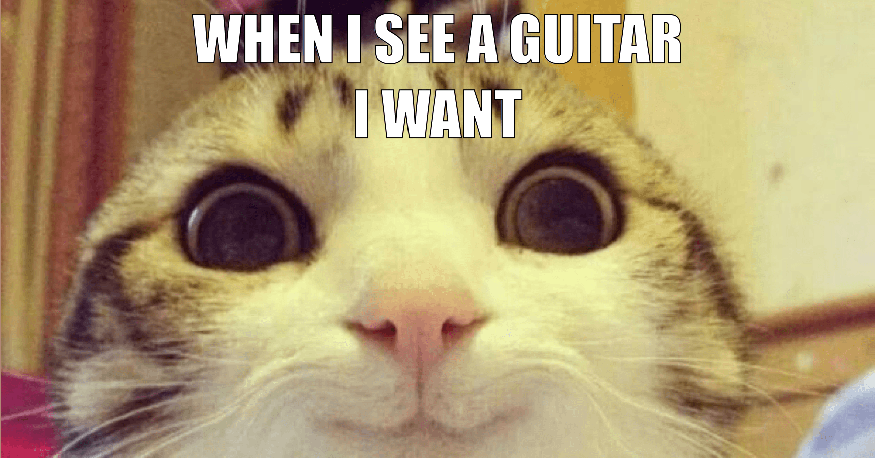blague chat guitariste gas